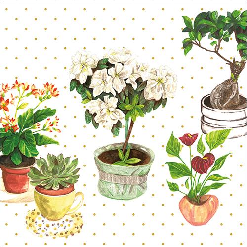 Still Life Plants