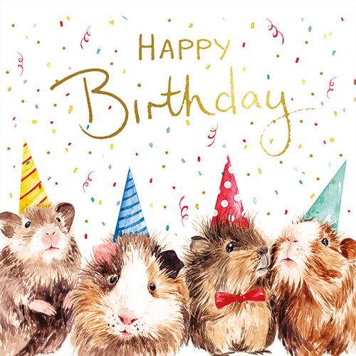 Guinea Pigs (Happy Birthday)